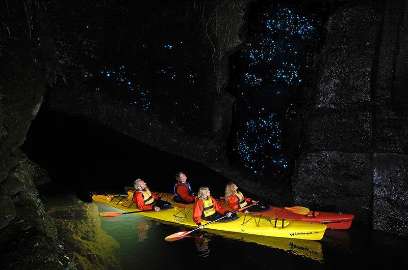 glow worm kayaking